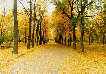 Парк садиби Давидових у Кам'янці